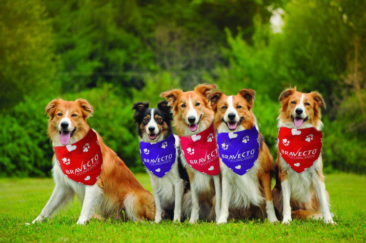 5 Dogs wearing different colored bandannas